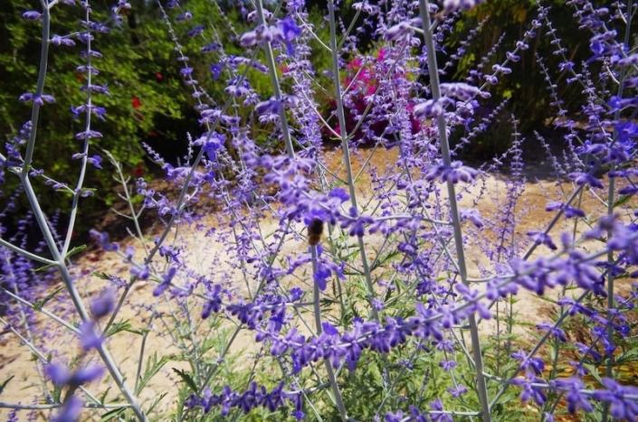 Landschaftsgestalterin Maria Sagreras - Gartengestaltung auf Mallorca