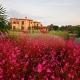 Can Bebo Garten entworfen von Viveros Pou Nou - Landschaftsbauprojekte auf Mallorca