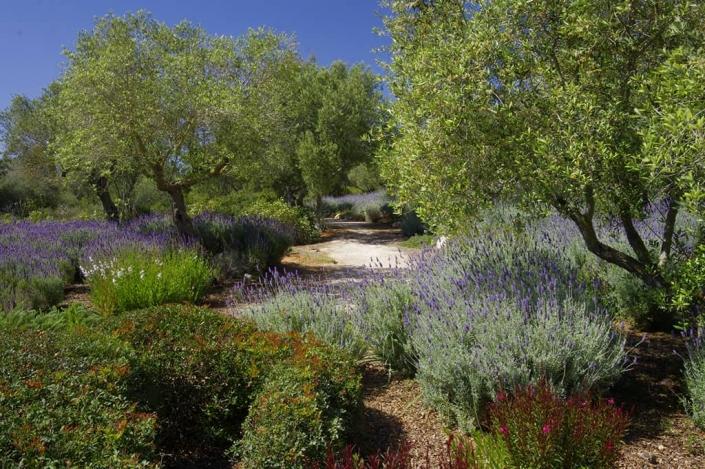 Landscaping project of Maria Sagreras in Can Brera - Mallorca - Viveros Pou Nou