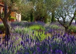 Diseño de jardines en Mallorca - Can Brera - Trabajo realizado por Viveros Pou Nou