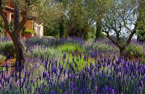Fotos Design und Bau des Gartens in Can Brera - Mallorca - Viveros Pou Nou - Landschaftsarchitektin: Maria Sagreras