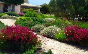 Detalle del jardín creado en Finca Sta. Marina en Mallorca por Viveros Pou Nou