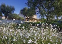 Gartengestaltung Son Rierol - Mallorca