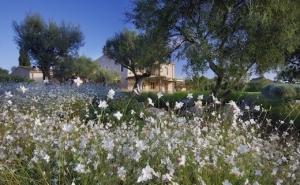 Diseño de jardín en Son Rierol - Mallorca