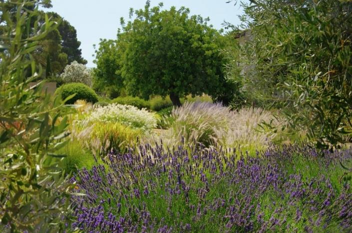Diseño de jardín en Son Ferreret - Mallorca - Viveros Pou Nou