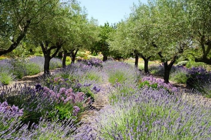 Landscaping project of Maria Sagreras in Son Ferreret - Mallorca - Viveros Pou Nou