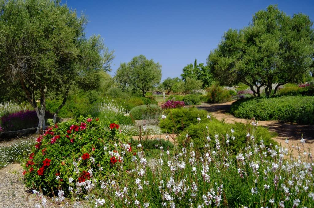 Landscaping project of Maria Sagreras in Sta. Marina - Mallorca - Viveros Pou Nou