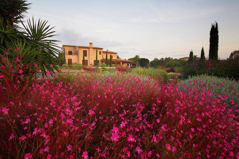 Blumen-in-Garten-von-Mallorca
