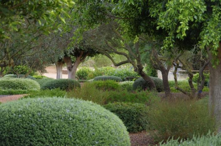 Die-Kombination-von-Bäumen-und-Sträuchern-gibt-der-Mallorca-Tiefe-und-Interesse