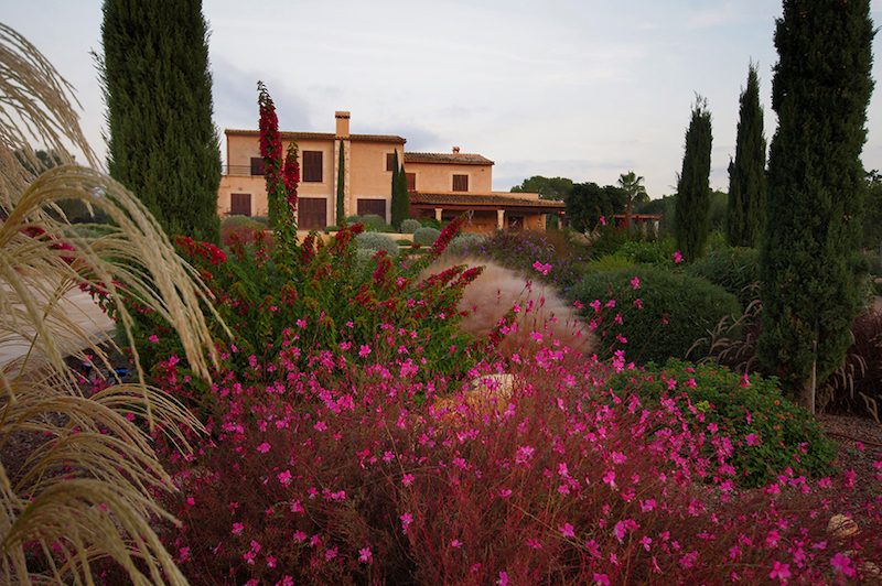 Flowers-and-gardens-in-mallorca
