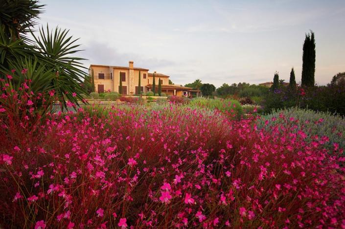Flowers-in-garden-of-mallorca