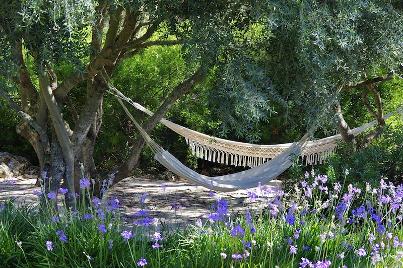 Hängematten-zum-Entspannen-im-Schatten-der-Olivenbäume