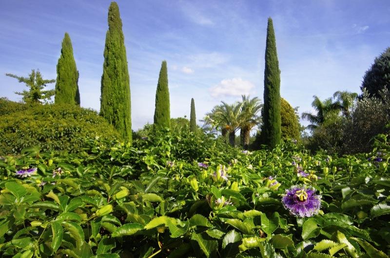 Zypressen-und-Pergola-mit-Pasiflora-Landschaftsbau-Mallorca