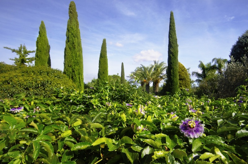cypresses-and-pergola-with-pasiflora-landscaping-mallorca