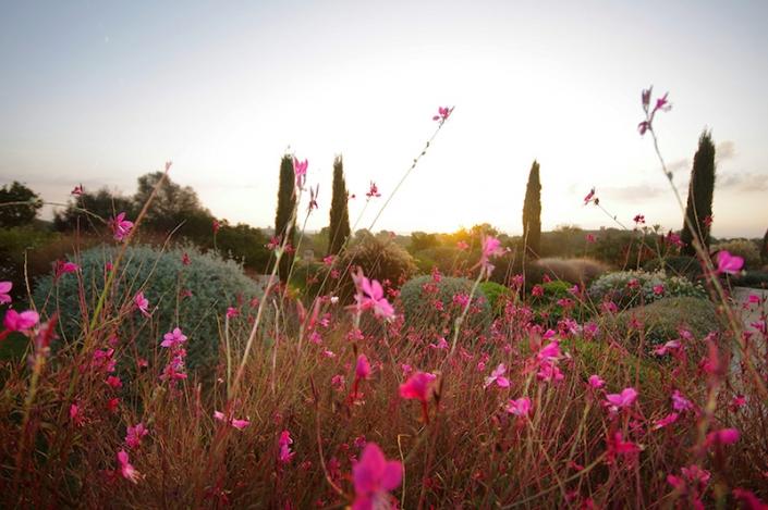 jardines-mediterraneos-en-mallorca