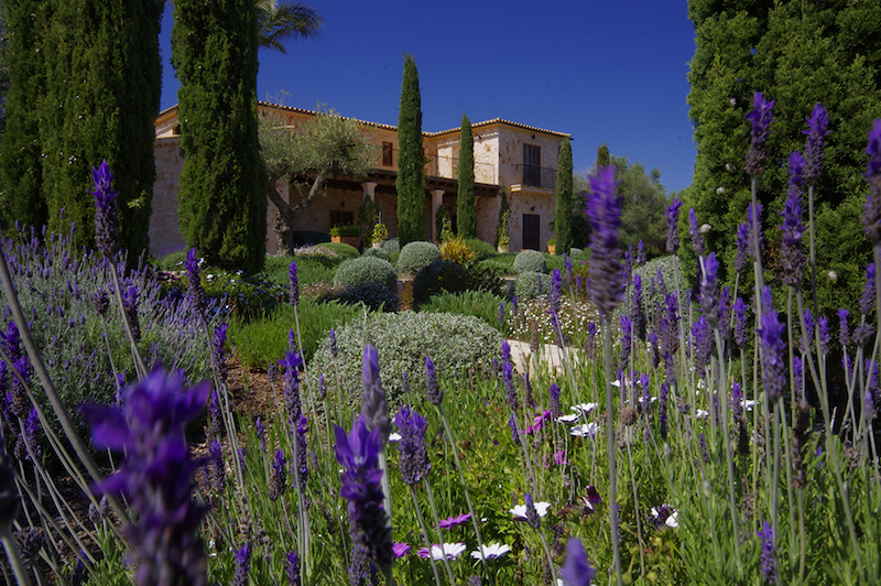 mallorca-mediterranean-accent-with-cypress-and-lavender-olive-trees