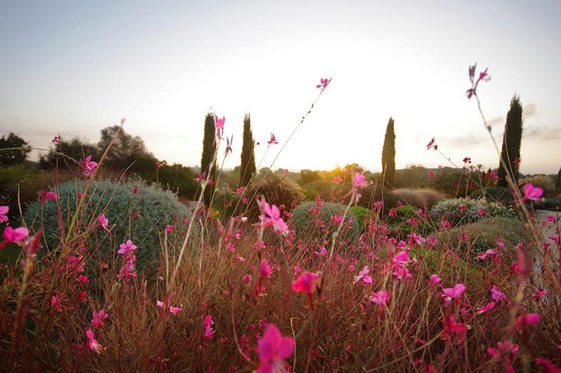 mediterranean-gardens-mallorca