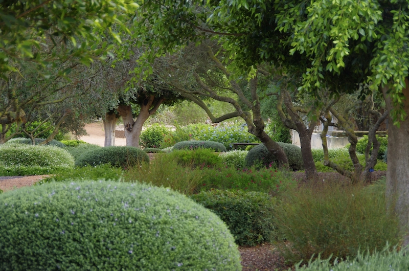 he-combination-of-tree-and-shrubs-gives-depth-and-interest-to-the-mallorca